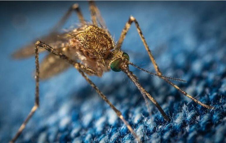 Ţânţari purtători ai virusului West Nile, depistaţi în Bucureşti - surse