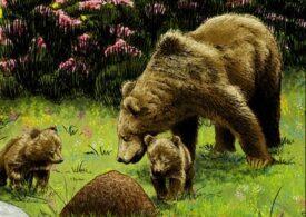 Turiști recuperați de pe munte, după ce s-au întâlnit cu o ursoaică cu pui