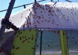 Invazia de buburuze a ajuns și în zona de plajă sălbatică Vadu-Corbu. Ce spun specialiștii