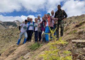 Reîmpădurirea unei zone tăiate la ras din Munții Făgăraș, cu ajutorul Zentiva: 20.000 de puieți au fost plantați