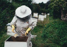 Cu 1,8 milioane de stupi, România asigură cea mai mare parte din producția de miere la nivel european (raport)