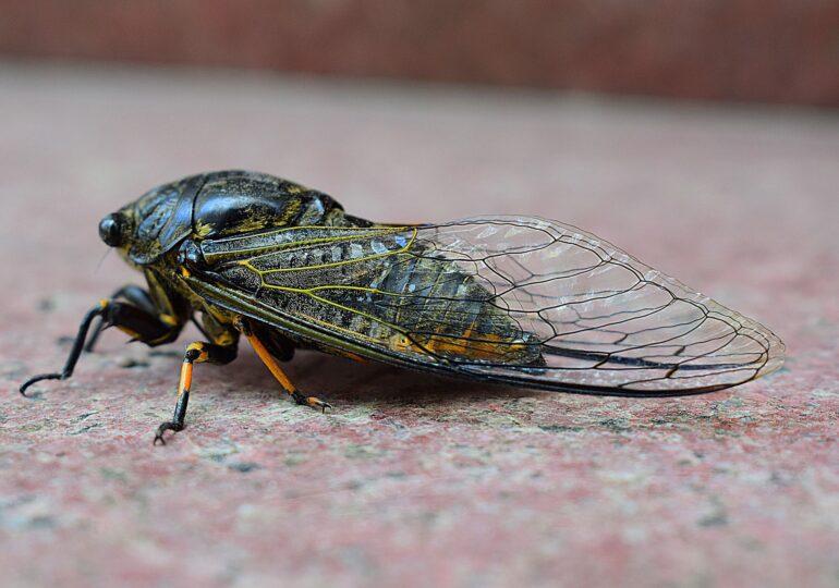 Nişte insecte fierte şi învelite în ciocolată sunt la mare căutare în SUA (Video)