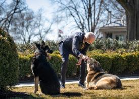 Unul dintre câinii lui Joe Biden a murit