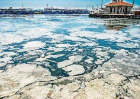 Mucilagiul marin amenință toate mările: Marea Marmara e copleșită!