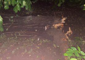Ce a rămas în urma furtunii care a măturat Capitala azi-noapte: Peste 100 de copaci au fost doborâți, zeci de mașini avariate (Galerie foto)