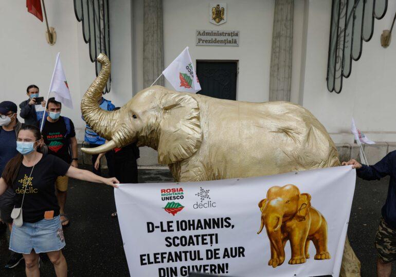 Protest la Cotroceni – Un elefant aurit, mesaj pentru Iohannis: Roşia Montană a devenit elefantul nevăzut din încăpere