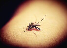 """Eco Igienizare: Primăriile din jurul Capitalei nu stârpesc țânțarii, așa că roiuri întregi vin spre oraș - <span style=""""color:#ff0000;font-size:100%;"""">UPDATE</span> CJ Ilfov neagă și amenință cu instanța"""