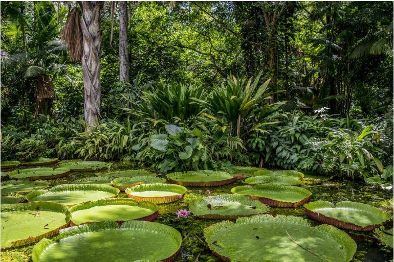 În premieră, pădurea amazoniană eliberează mai mult dioxid de carbon decât absoarbe