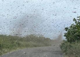 Imagini incredibile cu tornade de țânțari, în regiunea Kamceatka (Foto & Video)