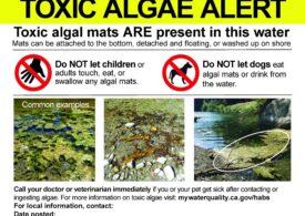 O familie întreagă a fost ucisă în SUA de o algă toxică