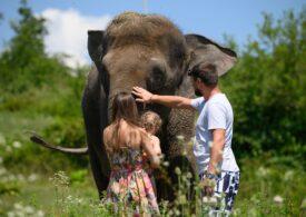 O țară din Africa are prea mulți elefanți, așa că a început să mai vândă din ei