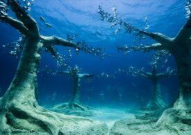 Un parc unic în lume a fost deschis în Cipru: Pădurea scufundată (Galerie foto)