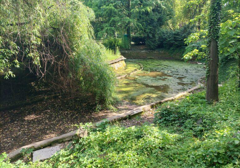 Povestea dezastrului din parcurile Capitalei: Cum i-a lăsat o administrație neputinciosă pe bucureșteni să își petreacă  vară printre bălării