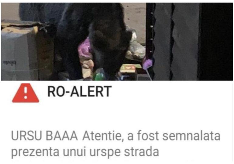 Povestea mesajului URSU BĂĂĂ: Tragedia unor oameni și urși, care așteaptă salvarea de la autorități total depășite