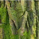 Mai mult de o treime dintre speciile de arbori de la nivel mondial ar putea dispărea. Pe listă sunt inclusiv specii din Europa