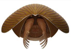 Fosila unei creaturi din Cambrian care nu seamănă cu nimic din ce se știe a fost descoperită în Canada