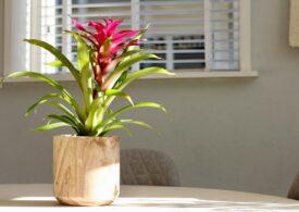 Flori benefice pentru casa ta