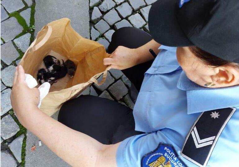 Un bucureștean a fost amendat cu 3.000 de lei, după ce a abandonat cinci pui de pisică