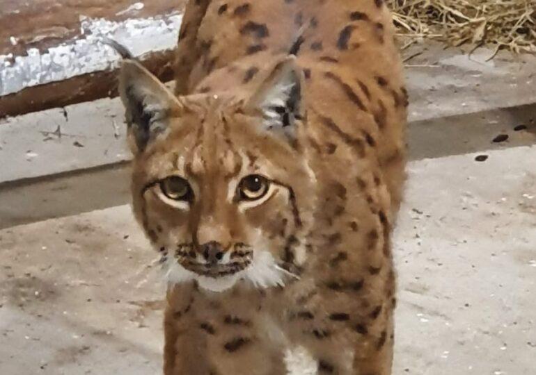 Zoo Brașov a primit din Ungaria două femele de râs