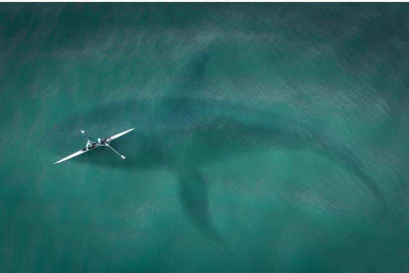 De ce atacă uneori rechinii oamenii. Studiu cu rezultate surprinzătoare