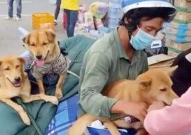 Caz șocant în Vietnam: 16 câini au fost uciși, după ce stăpânilor le-au ieșit pozitive testele de covid