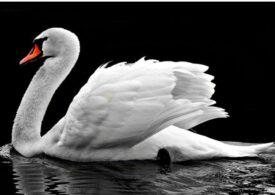 Un nou motiv de îngrijorare, pe lângă Covid-19. Un tip de gripă aviară tocmai a ucis şi mamifere