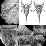 Scorpioni de