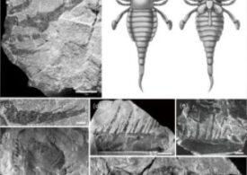 Scorpioni de talia unor câini trăiau acum mult timp, în mare