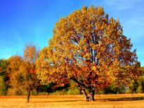 Prognoză meteo 25–31 octombrie 2021: Mult soare, ploi aproape deloc